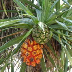2011-03-15 Bali 016