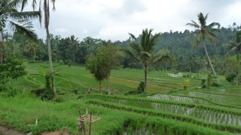 2011-03-18 Bali 069