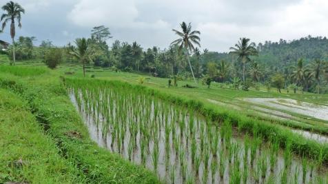 2011-03-18 Bali 076