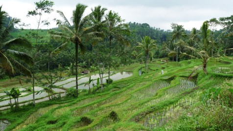 2011-03-18 Bali 078