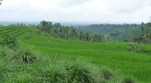 2011-03-18 Bali 092