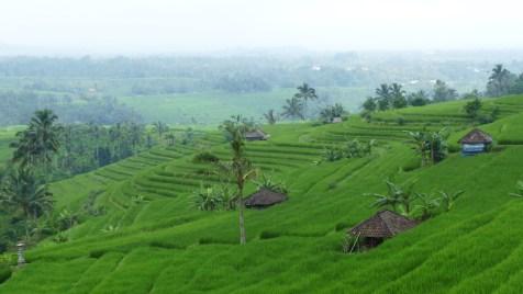 2011-03-18 Bali 102