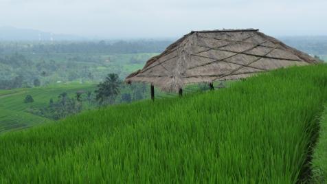 2011-03-18 Bali 105