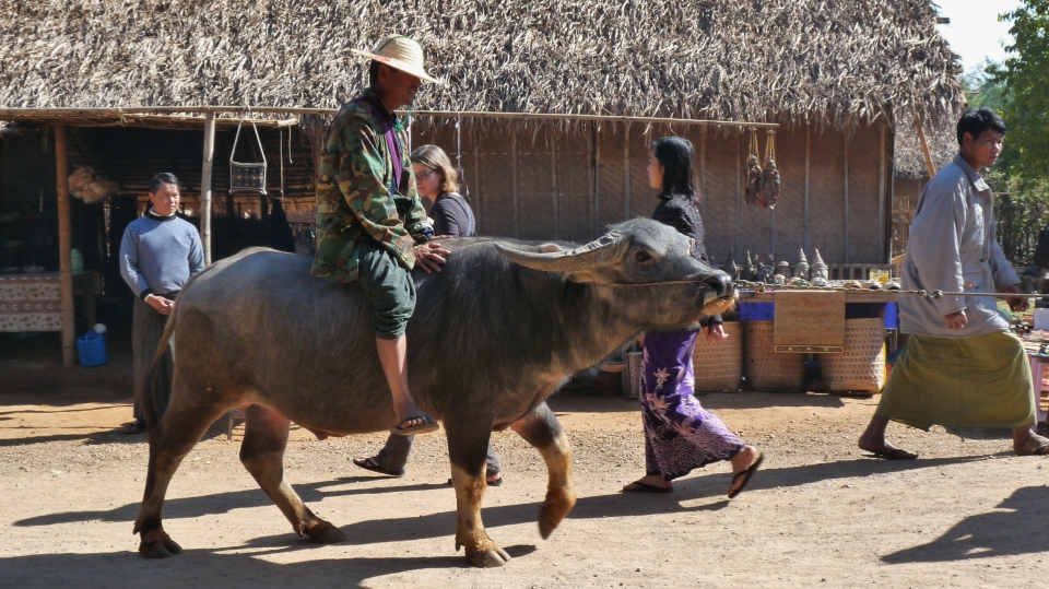 Burma 467