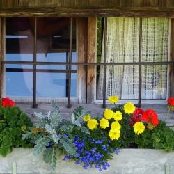 2014-07-18 18.7.2014 - Wolfgangsee 020