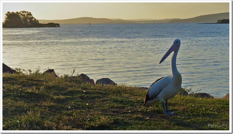 2015-03-16 16.03. - Nelson Bay 111