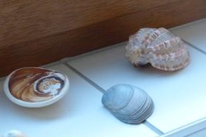 Muscheln von diversen Stränden