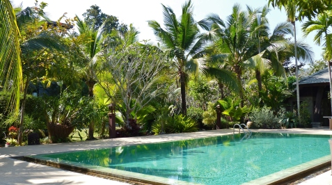 Pool unter Palmen