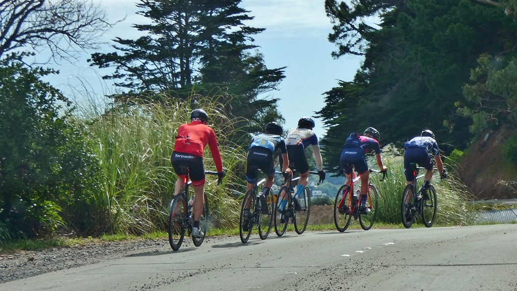 Rückseiten-Dunedin